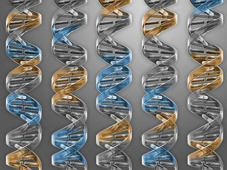 CRISPR gene editing takes on rare immunodeficiency disorder | Immunology and Biotherapies | Scoop.it