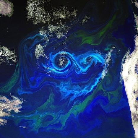 Plus d'oxygène sur Terre dans 100 ans ? - 123ocean | Planète, Nature et Biodiversité | Scoop.it