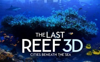 The Living Ocean: The Last Reef | Scuba Diving Adventures | Scoop.it