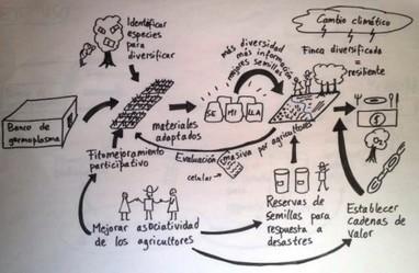 Farmersourcing germplasm evaluation   #smartcities   Scoop.it