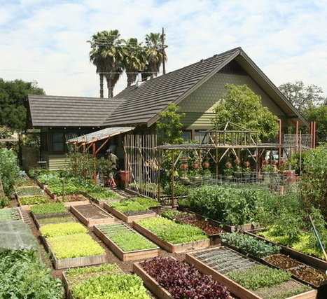 Meet The Family Growing 6,000 Pounds Of Food A Year In Their L.A. Backyard | Renew Cities: Environmental Sustainability | Scoop.it
