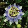 Botánica desde Uruguay