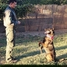 Obedience Dog Training DVD #2 - Come - Heel - Place - Apor