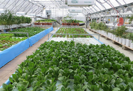 A Fight Over Soil Causes Deep Rift In Organic Industry | Organic Farming | Scoop.it