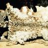 snow leopard conservation efforts
