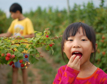 How Pesticides Harm Children's Health and Brains   Healthy Child Healthy World   Early Brain Development   Scoop.it