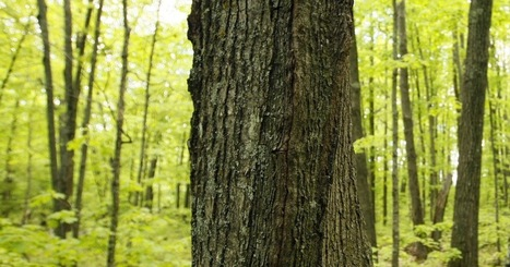 Judge: Timberland value plummets after conservation easement   Timberland Investment   Scoop.it