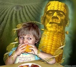 Just Say NO to GMO Frankencorn NOW! : Catalyst House | Monsanto vs Mother Earth | Scoop.it