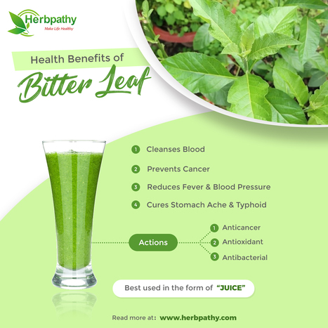 side effect of bitter leaf | Jidileaf co