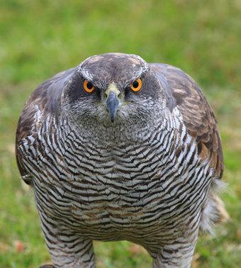 La liste rouge des oiseaux nicheurs d'Ile-de-France   Nature et urbanisme   Scoop.it