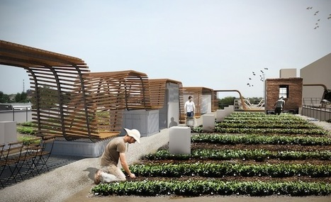Rally Saint Louis Idea: FOOD ROOF | Sustainable Urban Agriculture | Scoop.it