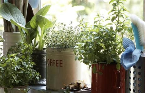 Thinking small in the garden can pay big dividends - Montreal Gazette | forest gardening | Scoop.it