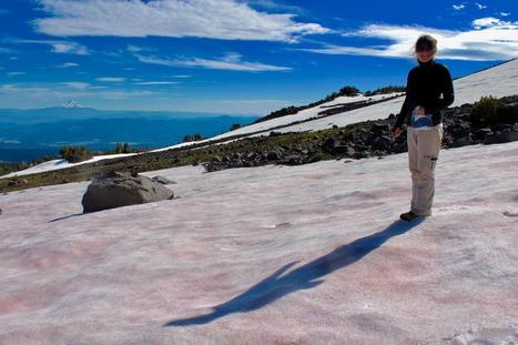 Pretty in pink: Some algae like it cold | Gaia Diary | Scoop.it