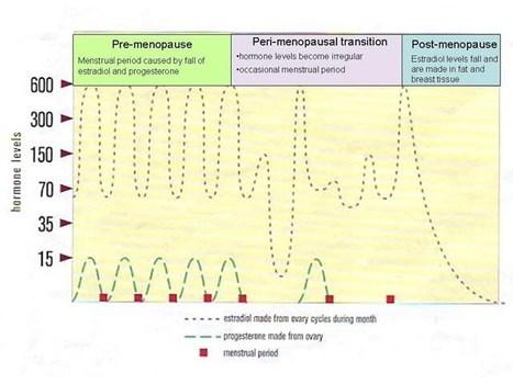 Menopause -What Is It? - Dr. Richard J. Santen   The Best of Google Knol   Scoop.it