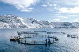 Les saumons norvégiens d'élevages nourris aux pesticides | Home ... | pesticides : un vrai cancer social ? | Scoop.it