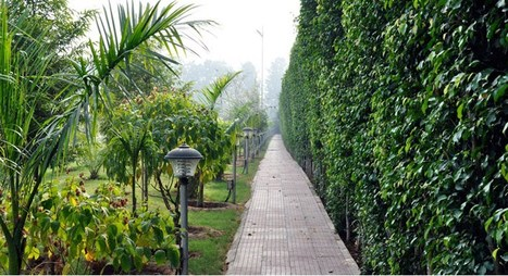 Best Ideas to Make Vertical Garden and Swimming...