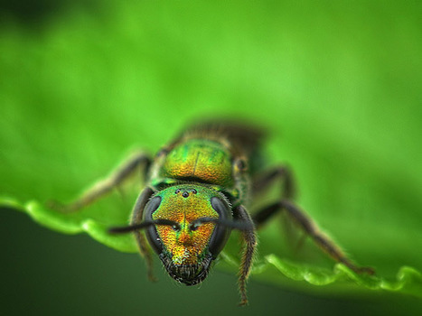 40 Interesting Examples of Macro Photography | Inspiration | Everything Photographic | Scoop.it