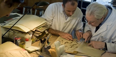 L'herbier de Paris du Muséum national d'histoire naturelle - France 3 Paris Ile-de-France | Merveilles - Marvels | Scoop.it