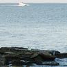 Michigan-Fishing.org