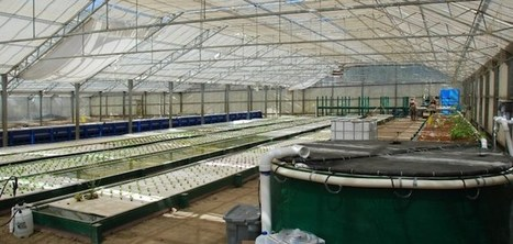 California Aquaponic Operation Seeks to Play Role in Evolution of Farming | Aquaponics in Action | Scoop.it