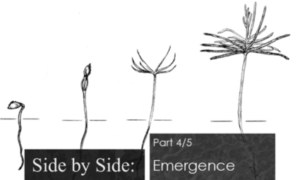 Side by Side - part 4/5: Emergence - DAWN.com   Joy and Business   Scoop.it
