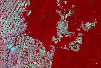 Real-time Brazilian Illegal Deforestation Mapping | Geographic Information Technology | Scoop.it
