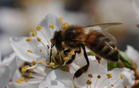 Mutualisme | EntomoScience | Scoop.it