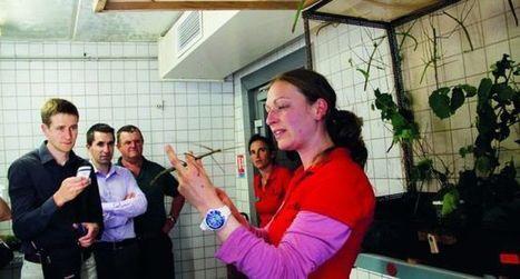 La Cité des insectes a 15 ans   L'info tourisme en Aveyron   Scoop.it