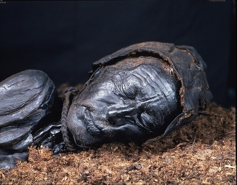 the bog bodies and what they