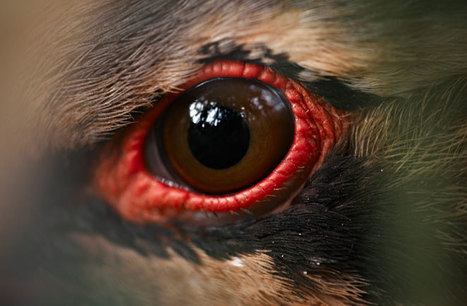 Birds' UV Vision has arisen independently more than 14 times during evolution | Totalmente Natura | Scoop.it