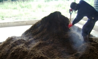 "Can human waste boost agriculture in Africa? - AlertNet (""Good paradigm shift""!) 