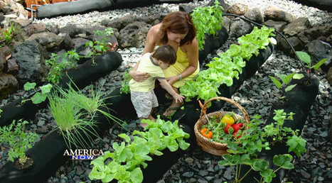 Turn your rooftop into a garden | Sustainable agriculture | Scoop.it