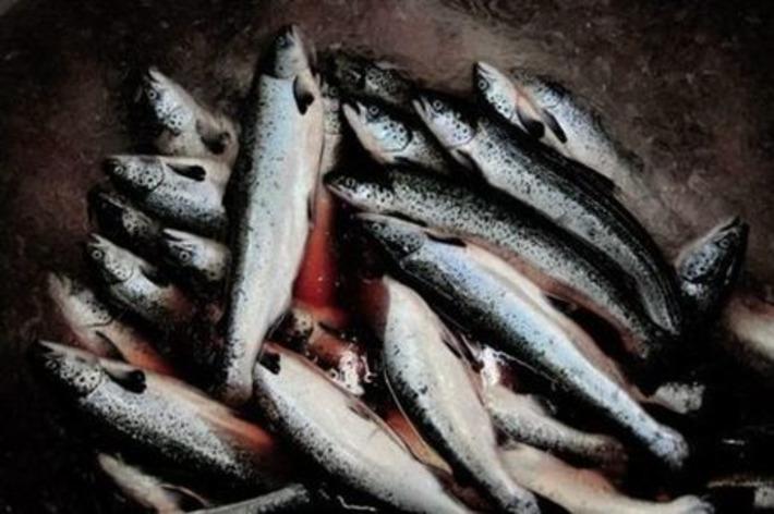 Arranmore, l'île des irréductibles pêcheurs irlandais | Iles | Scoop.it
