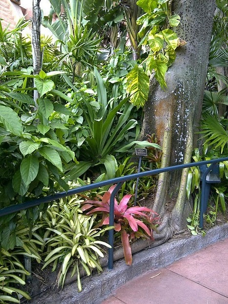 The Rainforest Garden: A Critic's Guide to the Mexican Garden at Epcot | forest gardening | Scoop.it