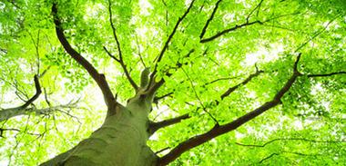 Nouveau centre de références sur le développement durable | equiterre.org - Pour des choix écologiques, équitables et solidaires | Bio alimentation | Scoop.it