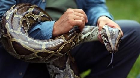 Una serpiente pitón escapa y mata a dos niños mientras dormían en Canadá - Mundo -  CNNMexico.com | Saber diario de el mundo | Scoop.it