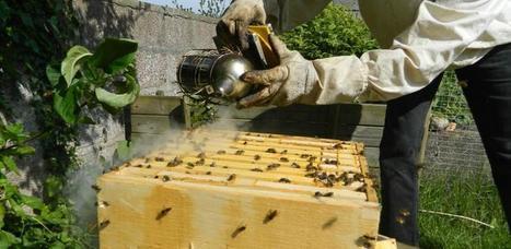 Europe : Plus de ruches, moins d'apiculteurs | EntomoNews | Scoop.it