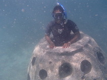 Marine life returning to Cable Beach as artificial reefs installed at Baha Mar - Bahama Islands Info | Coral Reef Ecology | Scoop.it
