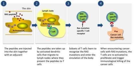 Targovax TG01 Pancreatic cancer vaccine in Phas