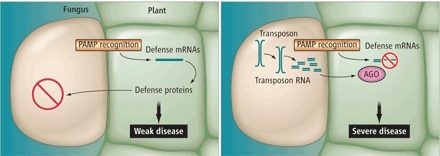 Science ($): Small RNA—the Secret of Noble Rot | Online Games for K-12 Learning | Scoop.it