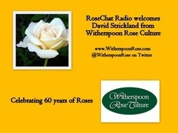 Rose Chat Radio | Dedicated to Roses | Annie Haven | Haven Brand | Scoop.it