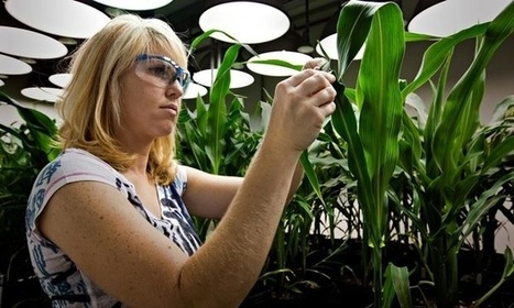 Why GM is the natural solution for future farming | Riffing on a Sustainable Society | Scoop.it