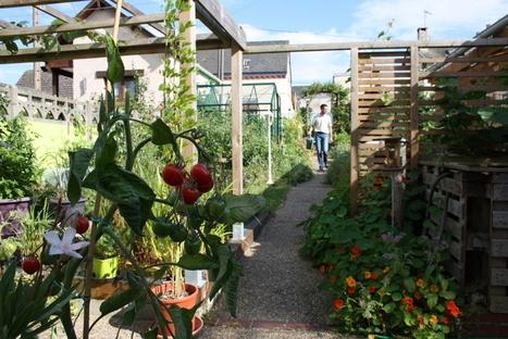 L'extraordinaire productivité d'un petit potager de 50 m2 : un exemple pour nourrir la ville de demain ? | (Culture)s (Urbaine)s | Scoop.it