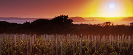 A New Dawn Rises Over the Aube | Jockovino | Côte des Bar champagne | Scoop.it