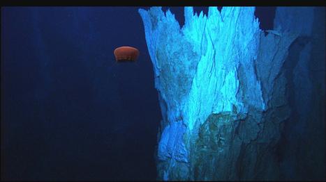 Deep Sea Mining a New Ocean Threat|Richard Steiner | Planet Earth | Scoop.it