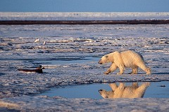 Banco Mundial teme trágico aumento de temperatura de 4°C para 2060 | Cosas que interesan...a cualquier edad. | Scoop.it