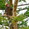 Brent's Tree Removal