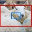 Superzoom Bridge Cameras Explained   Photography Tips & Tutorials   Scoop.it