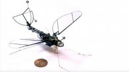 Robotik: Harvard-Forscher entwickeln Roboschmetterling | #Robotics #video | 21st Century Innovative Technologies and Developments as also discoveries, curiosity ( insolite)... | Scoop.it