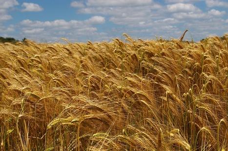 Agriculteurs et jardiniers seront-ils bientôt obligés de cultiver dans la clandestinité ? | Matière agricole | Scoop.it